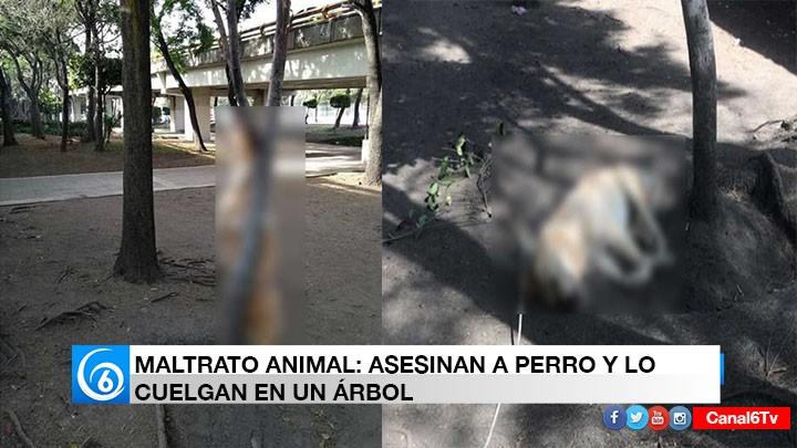MALTRATO ANIMAL: ASESINAN A PERRO Y LO CUELGAN EN UN ÁRBOL