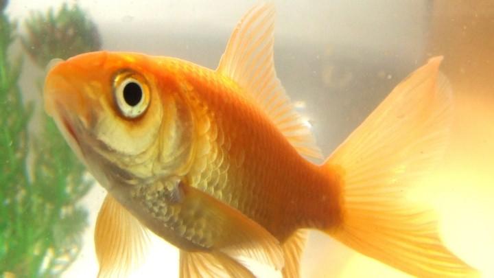 ¿Cómo nos ven los peces?