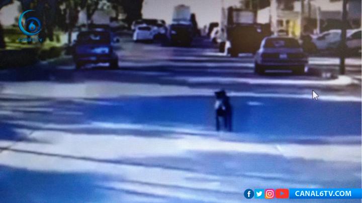 Perro muere atropellado por sus dueños luego de intentar abandonarlo