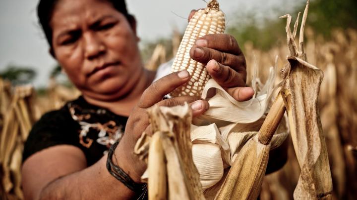 ¿Qué hay de las mujeres rurales afectadas por covid-19?