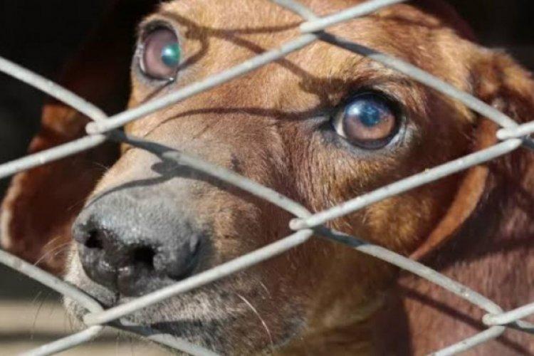 Diputados aprueban hasta dos años de prisión por maltrato animal y zoofilia