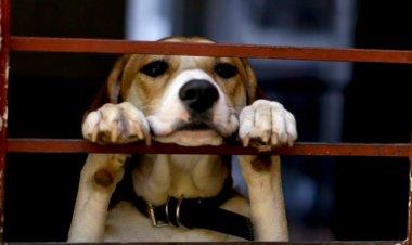 Maltrato animal impera en México pese a campañas de concientización