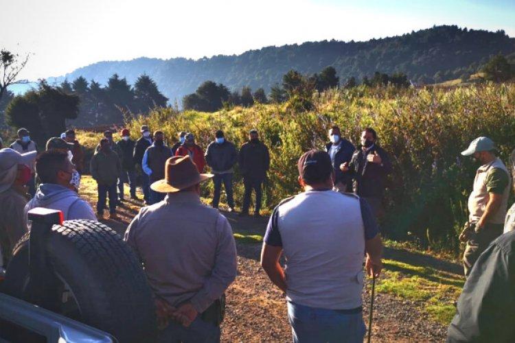 Buscan a lobo gris mexicano desaparecido en Edomex